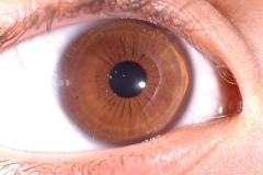 irideesempio (56)