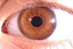irideesempio (57)