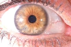 irideesempio (7)