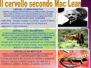 Struttura del cervello - MAC LEAN