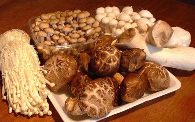 Funghi medicinali: 5 incredibili benefici per la salute