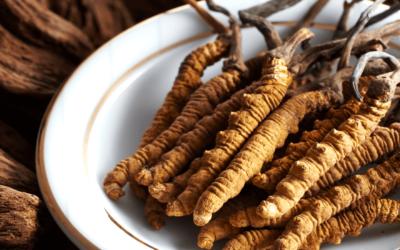 Cordyceps: un fungo medicinale con straordinari benefici per la salute